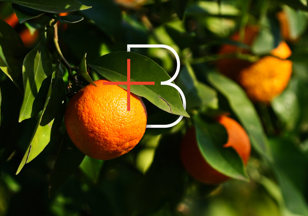We Are Branch: Learning To Love Orange
